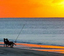 MaxiMotto Image:Beach fishing at Hervey bay
